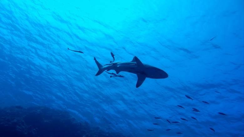 Εκπληκτικά καρέ από «επίθεση» καρχαρία σε δύτη στην Αυστραλία