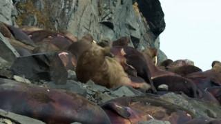 Σάλος με το βίντεο που σόκαρε τον πλανήτη – Τι απαντά το Netflix