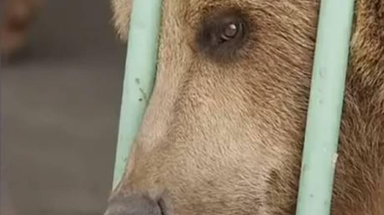 Καζακστάν: Αρκούδα… εκτίει ισόβια σε φυλακή υψίστης ασφαλείας