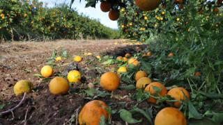 Τεράστιες ζημιές σε αγροτικές καλλιέργειες στην Ημαθία λόγω χαλαζόπτωσης