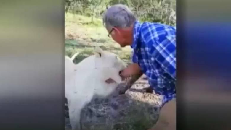 Ήθελε να χαϊδέψει λιοντάρια και το ένα του άρπαξε το χέρι
