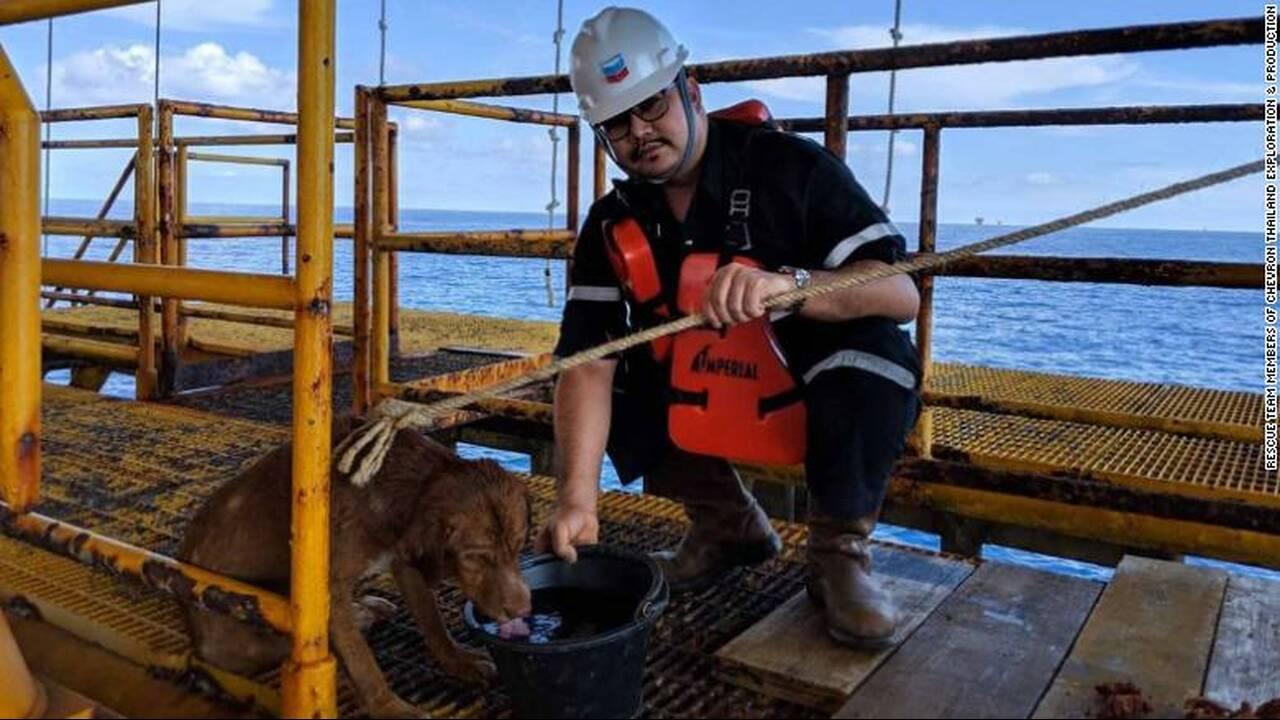 https://cdn.cnngreece.gr/media/news/2019/04/16/173263/photos/snapshot/190416131943-03-oil-rig-dog-rescue-exlarge-169.jpg