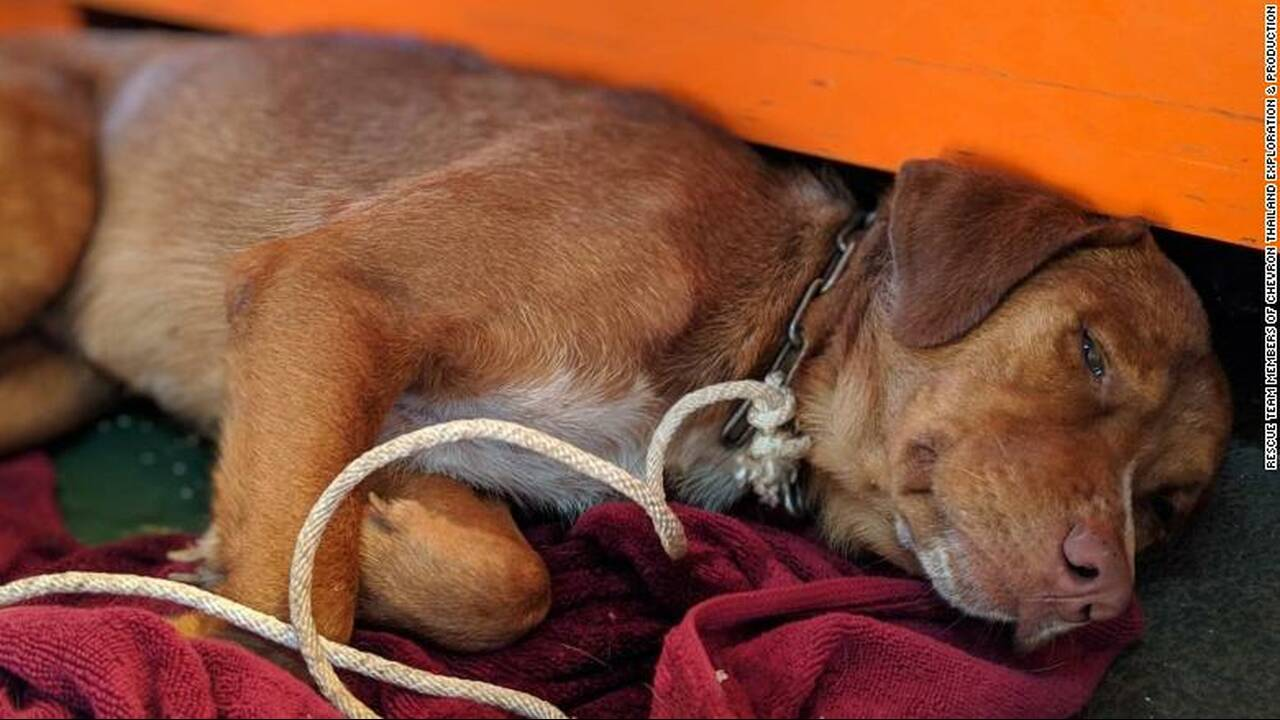 https://cdn.cnngreece.gr/media/news/2019/04/16/173263/photos/snapshot/190416132132-04-oil-rig-dog-rescue-exlarge-169.jpg