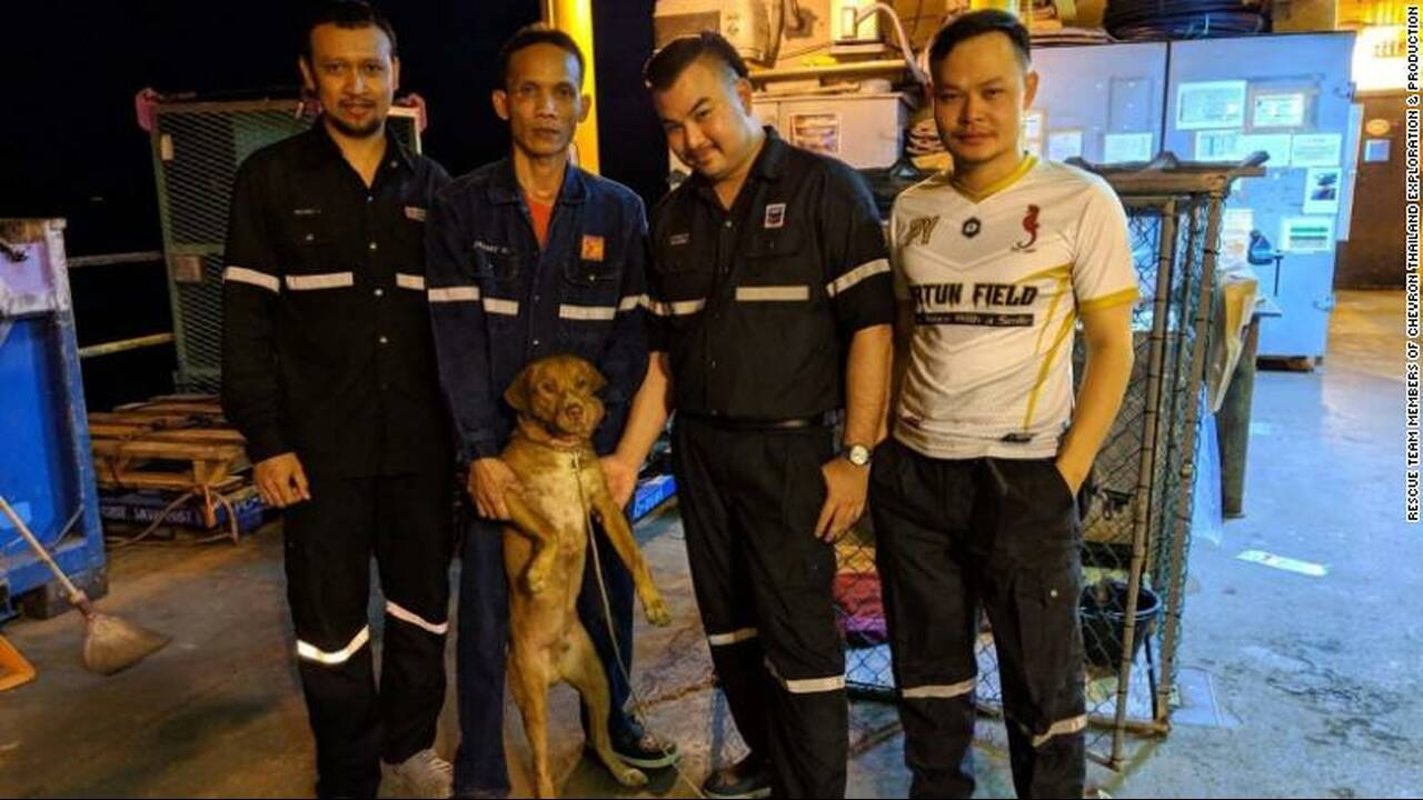 https://cdn.cnngreece.gr/media/news/2019/04/16/173263/photos/snapshot/190416132255-05-oil-rig-dog-rescue-exlarge-169.jpg