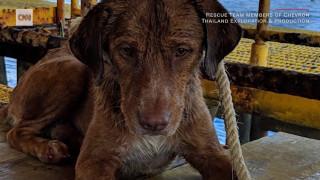 Τετράποδος survivor: Σκύλος βρέθηκε αποκαμωμένος να κολυμπά 200 χλμ από την ακτή