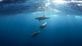 «Γενοκτονία» στο Αιγαίο: Αφανίζονται είδη λόγω υπεραλίευσης και ρύπανσης