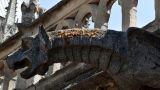 Παναγία των Παρισίων: Ευχάριστα νέα - Σώθηκαν οι μέλισσες του ναού
