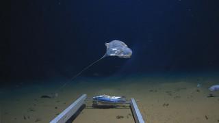 Μυστηριώδες πλάσμα εντοπίστηκε στον Ινδικό Ωκεανό (pics)