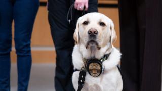 Ένας σκύλος στο πλευρό των παιδιών των Τέρπιν: Πώς τα βοήθησε να αντιμετωπίσουν τους γονείς τους