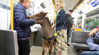 Τι γυρεύει ένα αλογάκι στο μετρό του Νιουκάστλ;