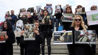 Συγκέντρωση vegan στην πλατεία Συντάγματος: Να σταματήσει η σφαγή και το σούβλισμα αρνιών