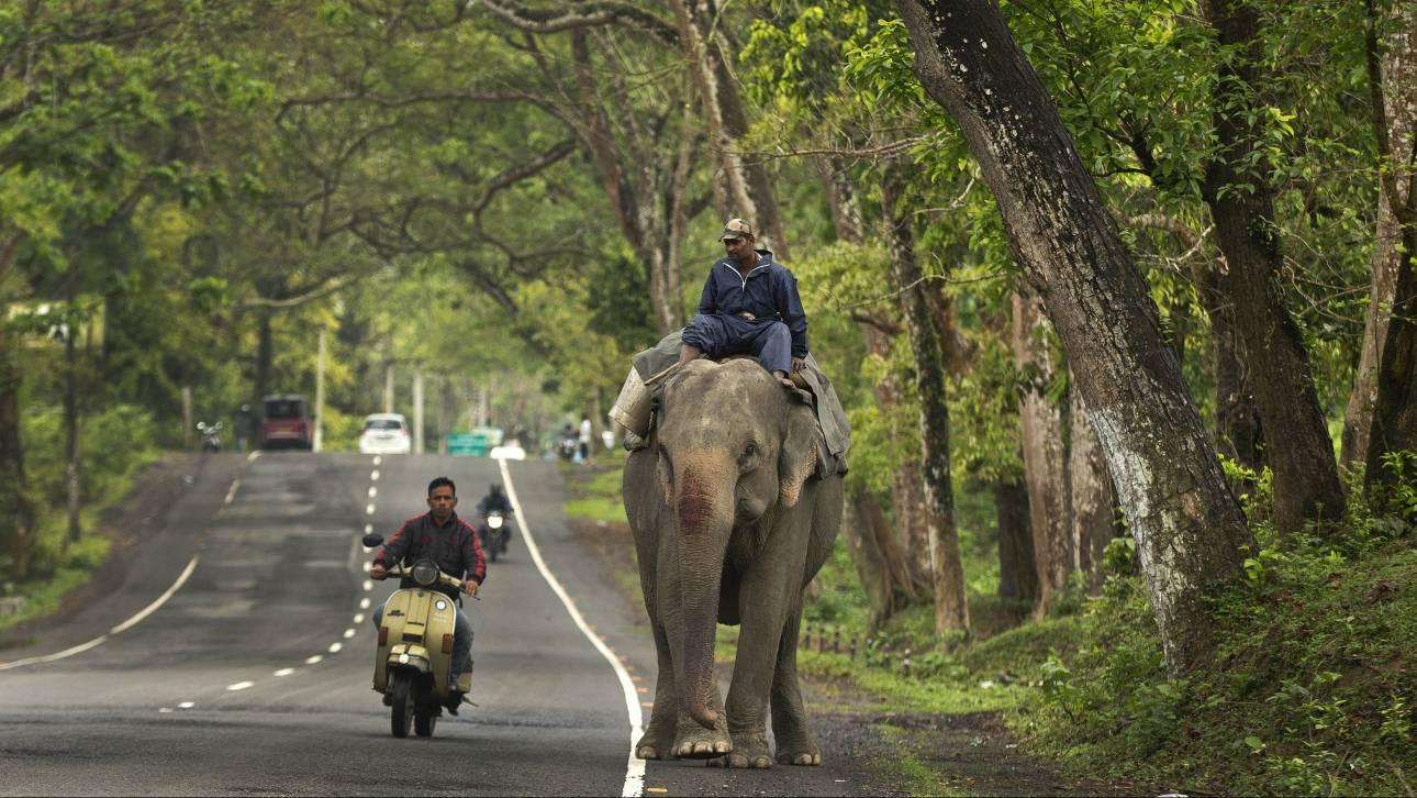 Άφησαν νηστικό ελέφαντα, τους ποδοπάτησε και... κέρδισε την ελευθερία του
