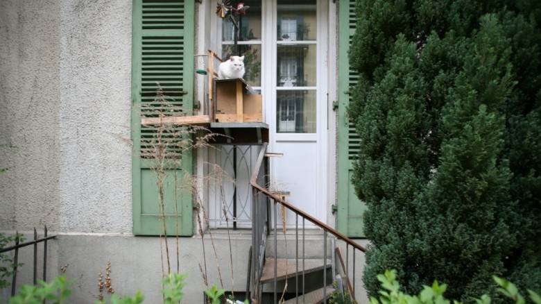 Οι Ελβετοί αγαπούν πολύ τις γάτες: Φτιάχνουν σκάλες για να ανεβαίνουν στα κεραμίδια