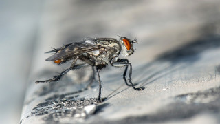 Τουρκία: Ανακαλύφθηκαν τρία νέα είδη εντόμων