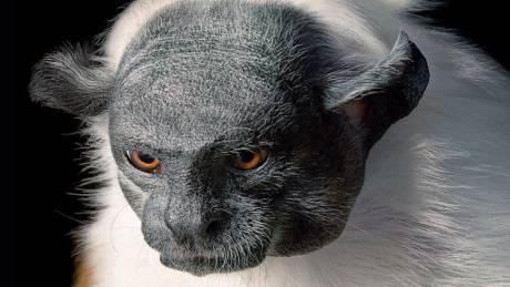 Αυτά τα ζώα απειλούνται με εξαφάνιση - Εντυπωσιακές φωτογραφίες