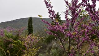 Καιρός Πάσχα – Ο Τάσος Αρνιακός στο CNN Greece: Με τι καιρό θα σουβλίσουμε