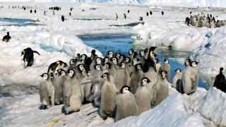 Ανταρκτική: Η κλιματική αλλαγή σχεδόν αφάνισε μία τεράστια αποικία αυτοκρατορικών πιγκουίνων