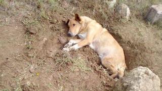 Παλλήνη: Έθαψαν σκύλο ζωντανό – Εξείχε μόνο το κεφάλι του