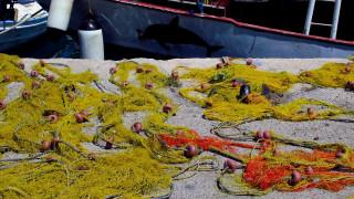Εντυπωσιακές εικόνες: Ψαράδες στη Νάξο έβγαλαν τόνο... 288 κιλών