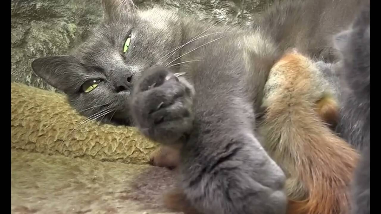 https://cdn.cnngreece.gr/media/news/2019/04/26/174525/photos/snapshot/cat1.jpg