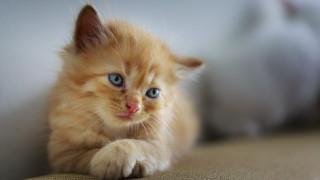 Γιατί οι Αυστραλοί θέλουν να θανατώσουν δύο εκατομμύρια γάτες;