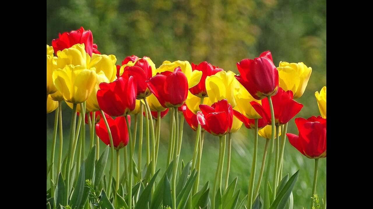 https://cdn.cnngreece.gr/media/news/2019/04/27/174591/photos/snapshot/flower-3393276_1280.jpg