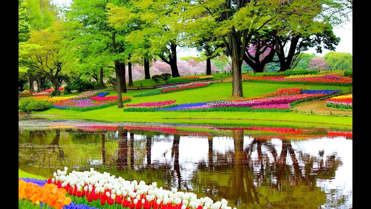 https://cdn.cnngreece.gr/media/news/2019/04/27/174591/photos/snapshot/garden-1093681_1280.jpg