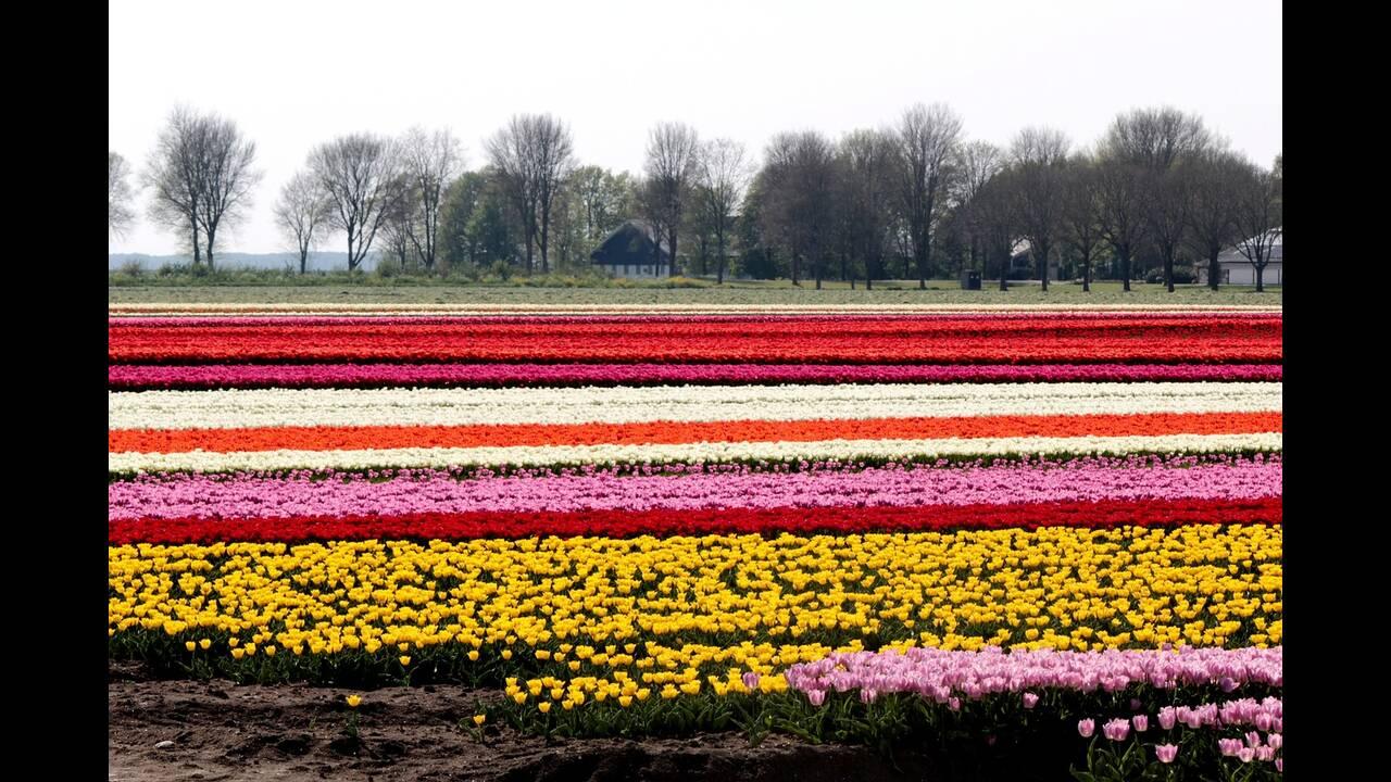 https://cdn.cnngreece.gr/media/news/2019/04/27/174591/photos/snapshot/tulip-fields-4157463_1280.jpg
