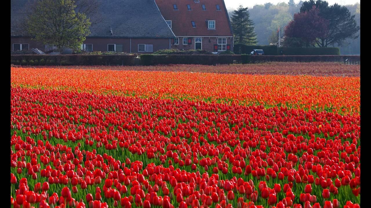 https://cdn.cnngreece.gr/media/news/2019/04/27/174591/photos/snapshot/tulips-21639_1280.jpg