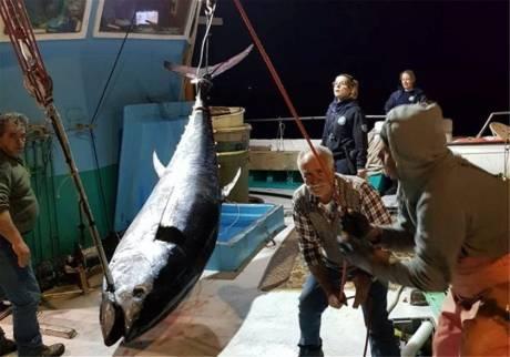 Νάξος: Έπιασαν τόνο - γίγαντα 288 κιλών