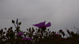 Καιρός: Ζέστη με λιακάδα και... βροχές