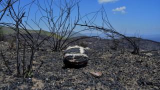 Φωτιά Μάτι: Επιχείρηση απομάκρυνσης του αμιάντου από τις πληγείσες περιοχές