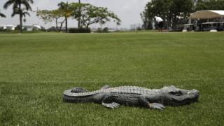 Απίστευτο: Αλιγάτορας χτύπησε το κουδούνι σπιτιού σαν κανονικός κύριος