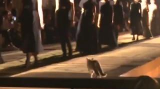 Γάτα έκλεψε την παράσταση σε... επίδειξη μόδας στο Μαρακές
