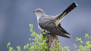 ΟΗΕ: Ένα εκατομμύριο είδη απειλούνται με εξαφάνιση - Ο ρυθμός επιταχύνεται επικίνδυνα