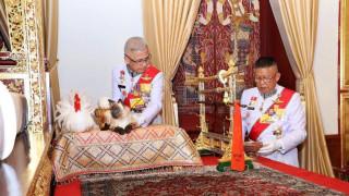 Ταϊλάνδη: Ο σιαμαίος γάτος της στέψης του βασιλιά που «τρέλανε» τον πλανήτη