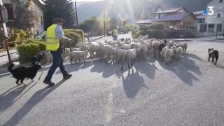 Μαθητές – πρόβατα ή πρόβατα μαθητές; Στη Γαλλία το δεύτερο…