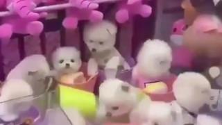 Οργή για παιχνίδι arcade με δαγκάνα: Αντικατέστησαν τα λούτρινα με ζωντανά κουτάβια