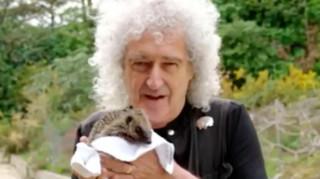 Ο κιθαρίστας των Queen είναι ήρωας για χιλιάδες τραυματισμένους... σκαντζόχοιρους!