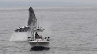 Εικόνες που κόβουν την ανάσα: Φάλαινα αναδύεται και βουτά μπροστά από το καΐκι ψαρά