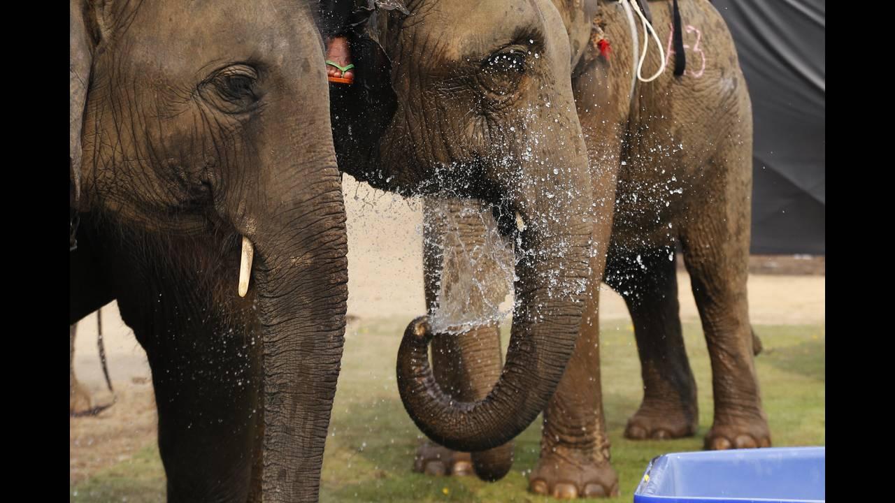 https://cdn.cnngreece.gr/media/news/2019/05/15/176812/photos/snapshot/THAILAND-ELEPHANT-POLO-REUTERSJorgeSilva1.jpg