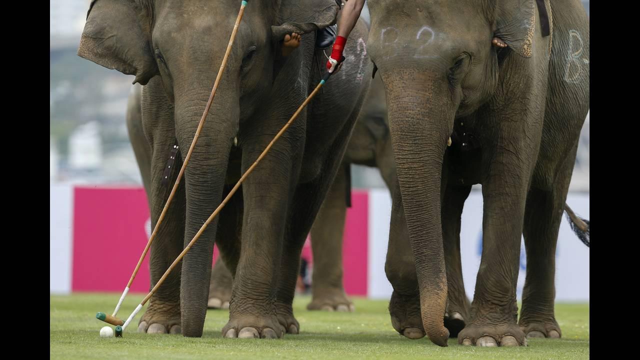 https://cdn.cnngreece.gr/media/news/2019/05/15/176812/photos/snapshot/THAILAND-ELEPHANT-POLO-REUTERSJorgeSilva12.jpg