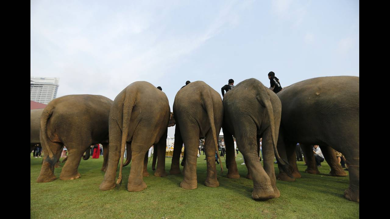 https://cdn.cnngreece.gr/media/news/2019/05/15/176812/photos/snapshot/THAILAND-ELEPHANT-POLO-REUTERSJorgeSilva13.jpg