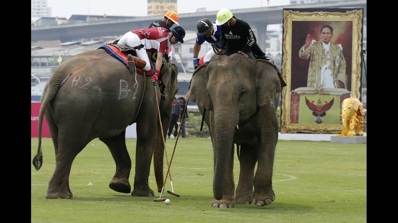 https://cdn.cnngreece.gr/media/news/2019/05/15/176812/photos/snapshot/THAILAND-ELEPHANT-POLO-REUTERSJorgeSilva2.jpg