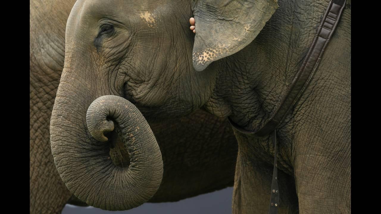 https://cdn.cnngreece.gr/media/news/2019/05/15/176812/photos/snapshot/THAILAND-ELEPHANT-POLO-REUTERSJorgeSilva4.jpg