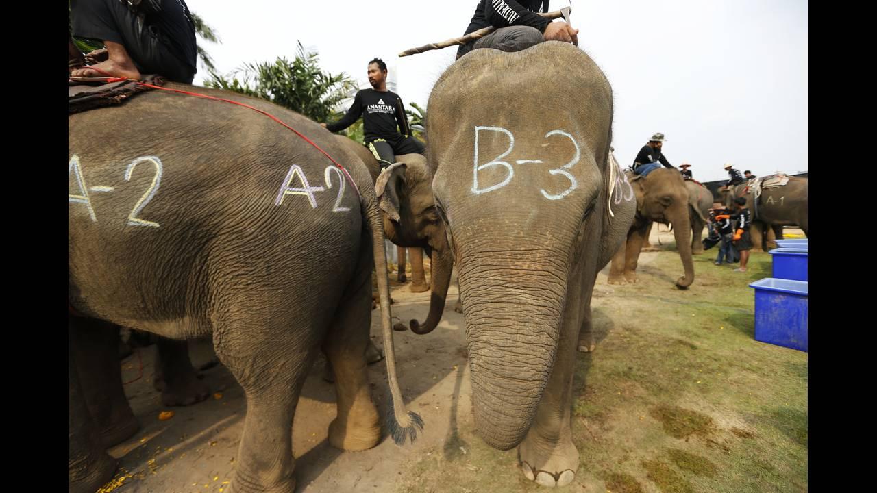 https://cdn.cnngreece.gr/media/news/2019/05/15/176812/photos/snapshot/THAILAND-ELEPHANT-POLO-REUTERSJorgeSilva5.jpg