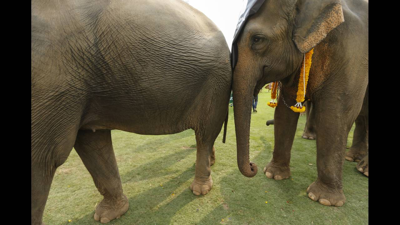 https://cdn.cnngreece.gr/media/news/2019/05/15/176812/photos/snapshot/THAILAND-ELEPHANT-POLO-REUTERSJorgeSilva7.jpg