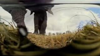 Πώς αντέδρασε κοπάδι ελεφάντων όταν ανακάλυψε μία κρυμμένη κάμερα;