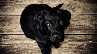 Κινέζος φυλακίστηκε γιατί έδωσε στα σκυλιά του «παράνομα ονόματα»