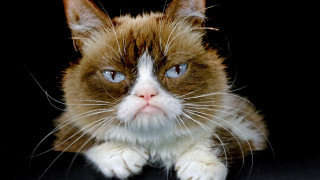 Grumpy Cat ή... γκρινιάρα γάτα: Πέθανε ένα διαδικτυακό φαινόμενο